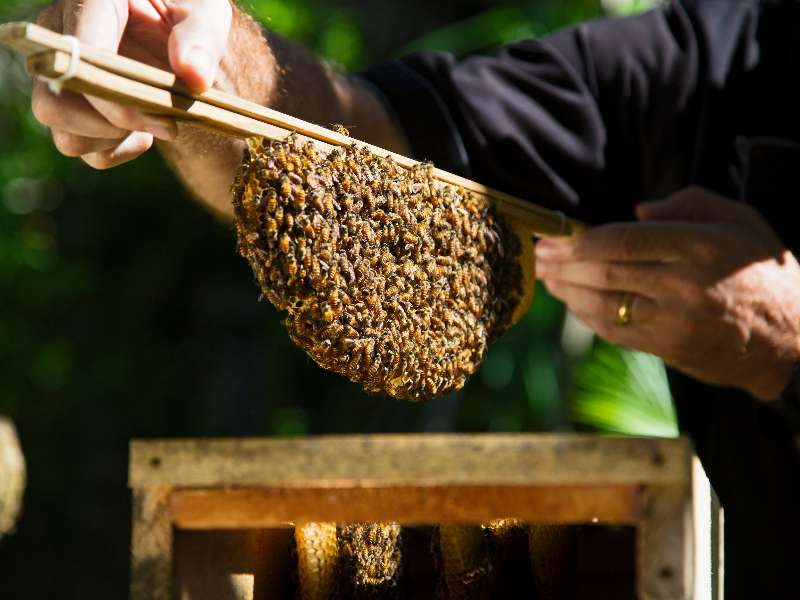 bees-green-initiatives-at-the-bvlgari-resort-bali